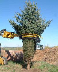 tree tyer with skid steer